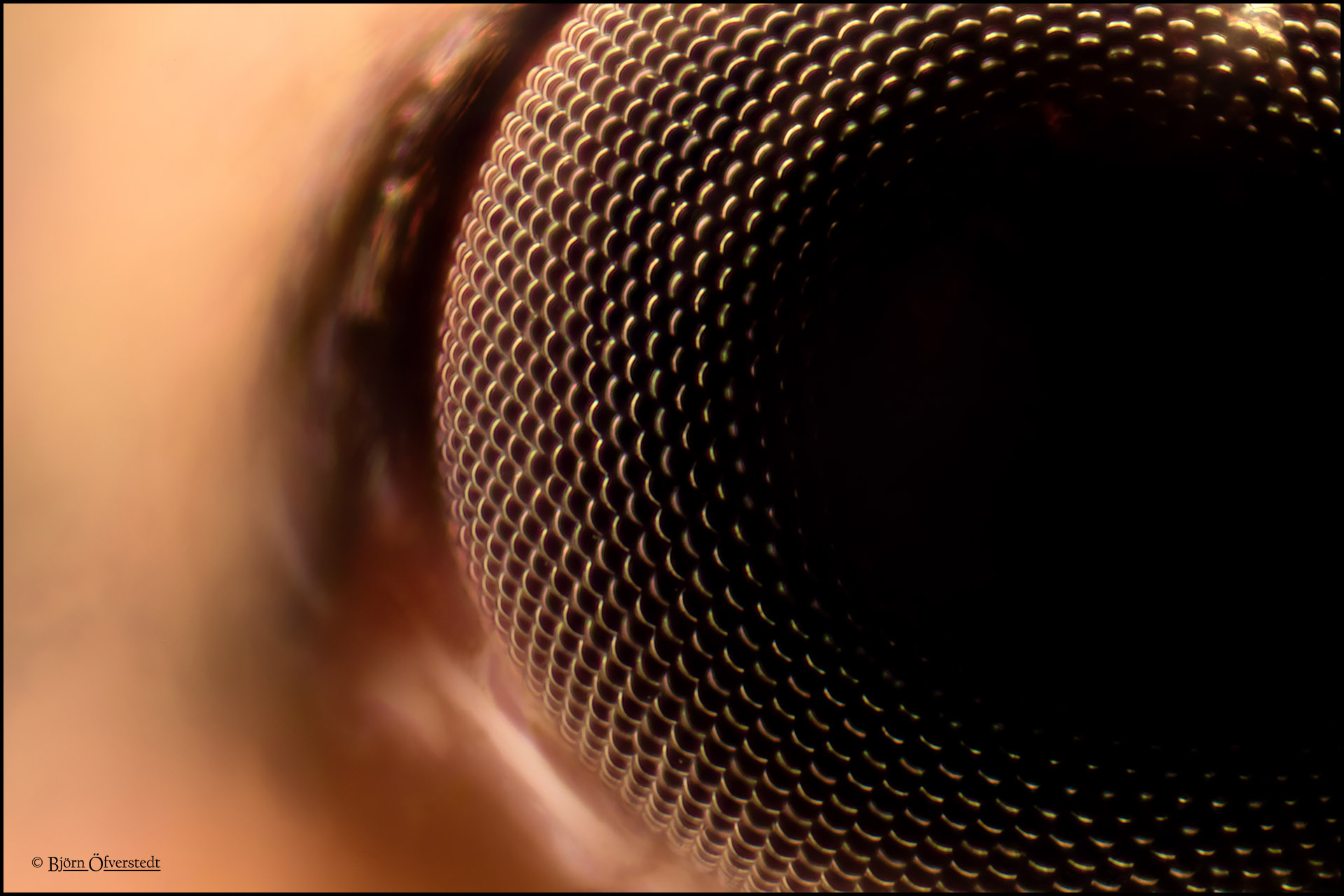 Eye of a fly